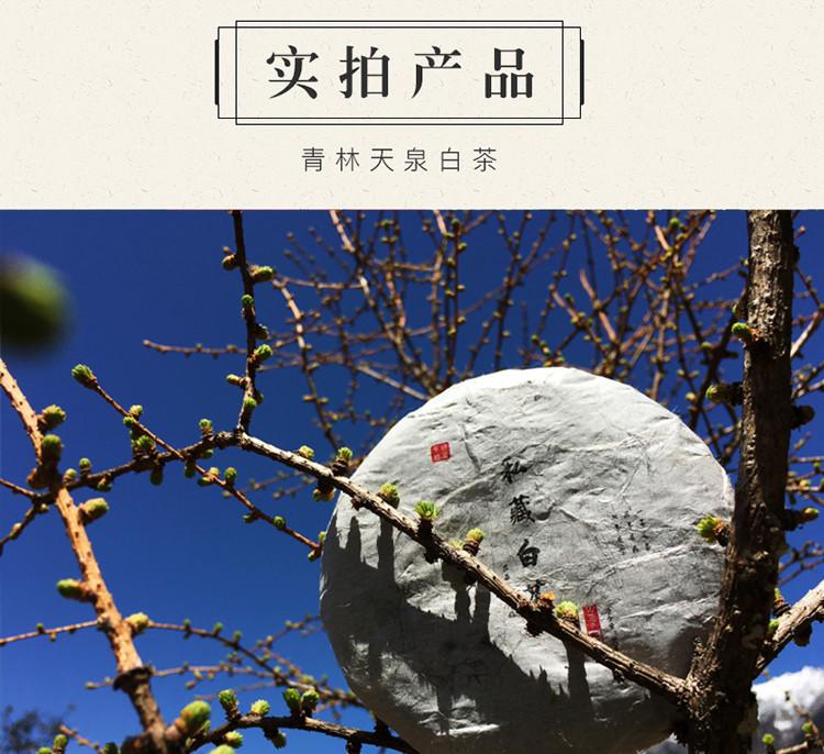天泉白茶_10.jpg