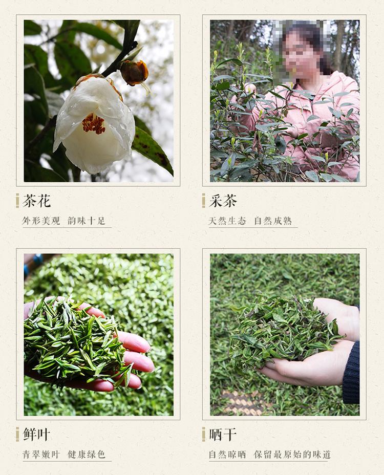 天泉白茶_13.jpg